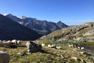Wandern in den Hohen Tauern, Stachlerhof, Anna Steiner, Ferien auf dem Bauernhof | Foto: Marc Peridis