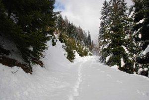 Spuren im Schnee | Foto: Anna Steiner