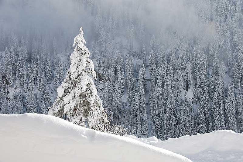 Winterimpressionen Hohe Tauern, Stachlerhof, Ferien auf dem Bauernhof, Anna Steiner | Foto: Anna Steiner