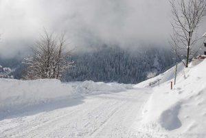 Zufahrtsweg zum Stachlerhof bei Neuschnee | Foto: Anna Steiner
